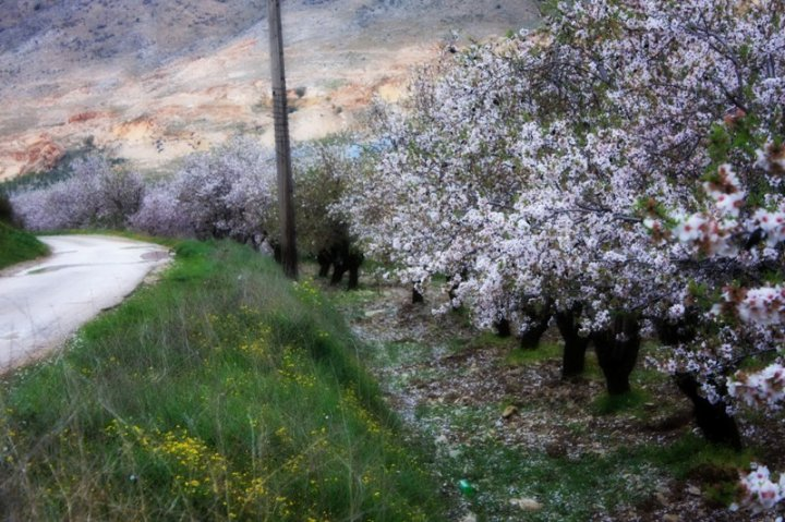 Spring scene at Anti-Lebanon mountains, March 2010, photo by yours truly.
